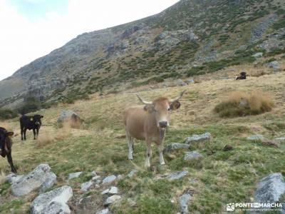 El Calvitero _ Sierra de Béjar y Sierra de Gredos;embalse de pedrezuela cascada del purgatorio send